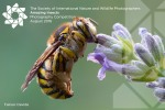 Amazing Insects Photography Competition